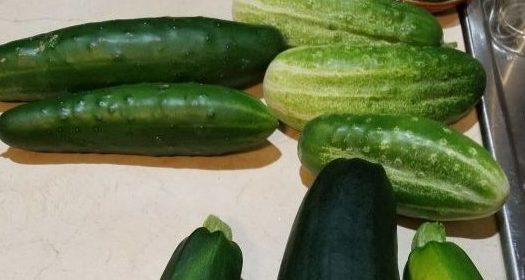 Garden veggie