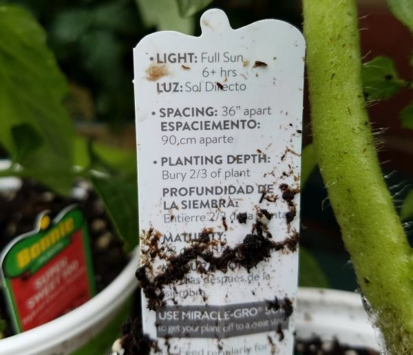 Store Bought Seedlings Instructions